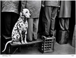 Shutters Wide Open: Leica Celebrates its 100 Years  Shutters Wide Open: Leica Celebrates its 100 Years 1956 WalterVogel Hund leica yatzer 300x229