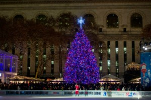 Best Christmas Trees in New York  Best Christmas Trees in New York Best Christmas trees in New York Madison Square Park 1 300x199